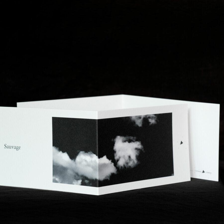 Carte Postale « sauvage »