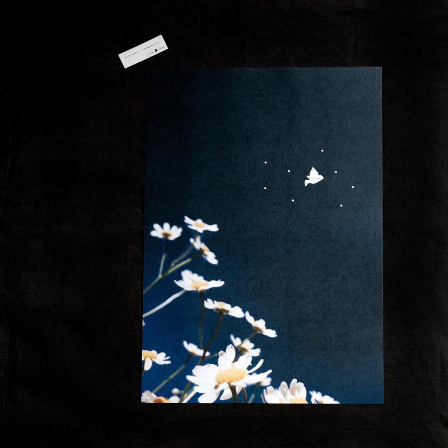Affiche A3 « Bleue »