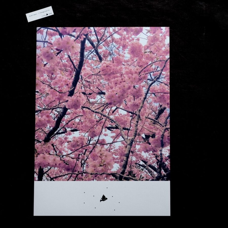Affiche rose avec tirage numéroté