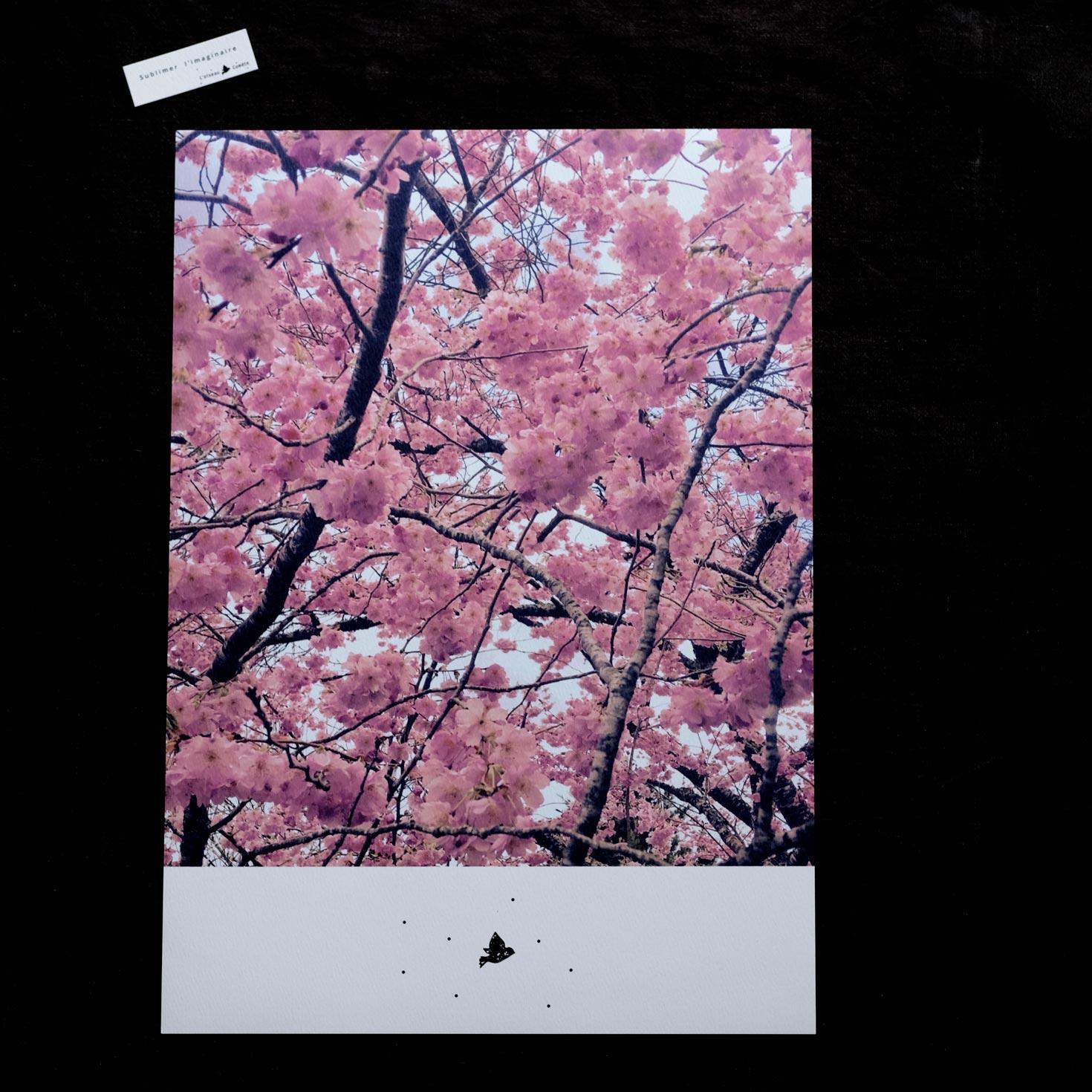 Affiche A3 « Rose »