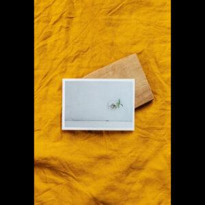 Carte Postale « Plante s'invitant »